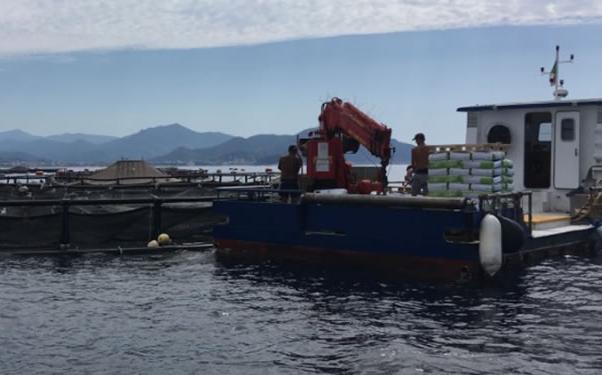 Monitoraggio dell'ambiente marino